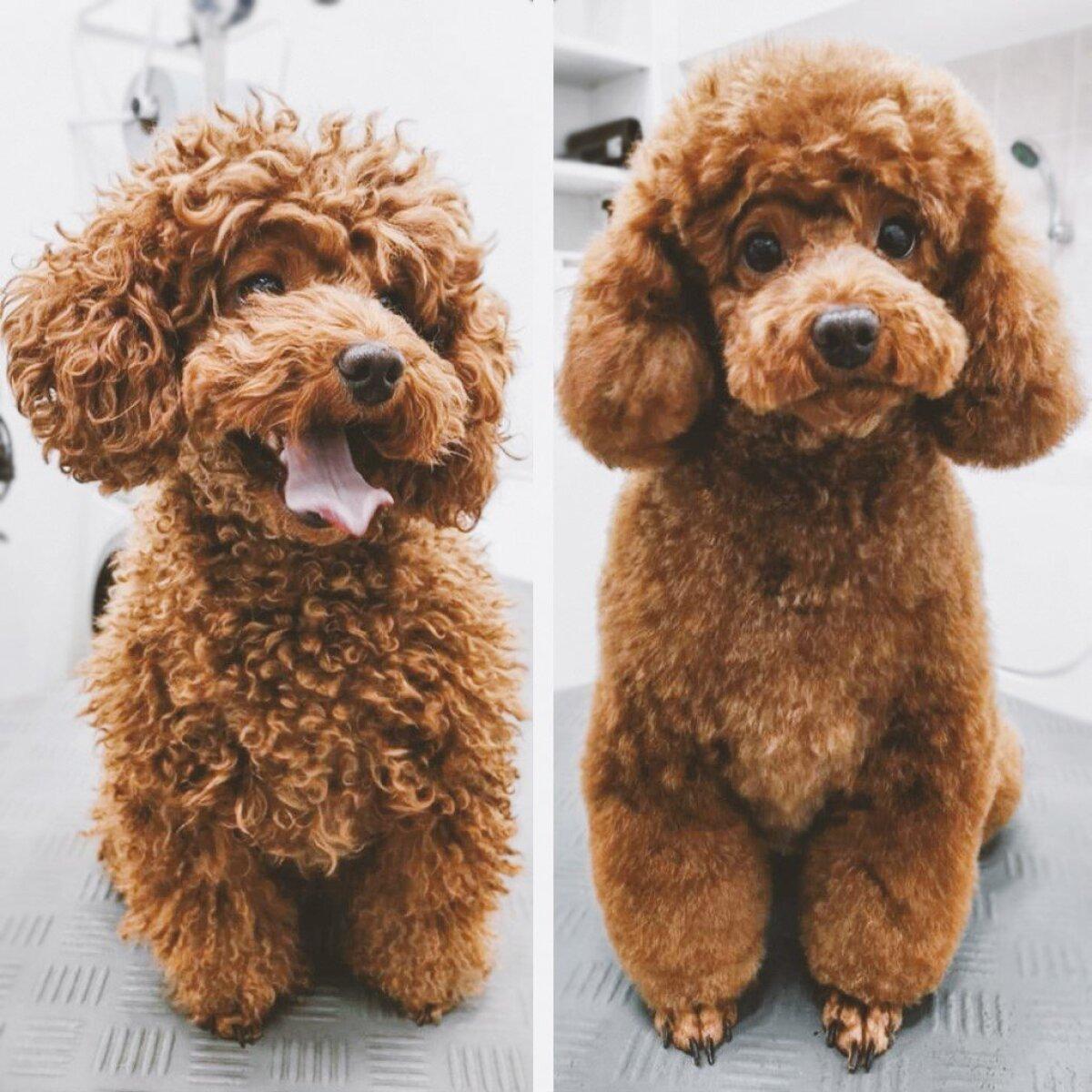 On koeri, keda ilusalongis viibimine lõbustab