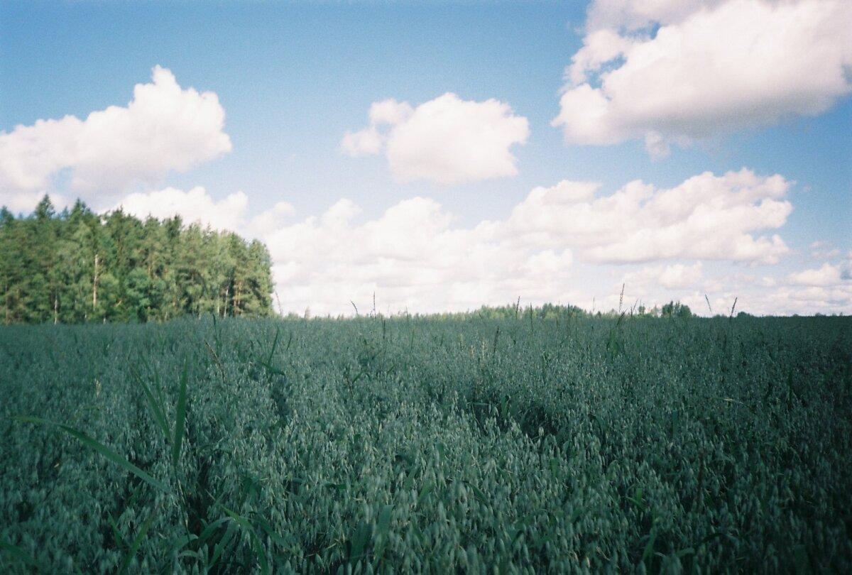 Эстонские поля - самые лучшие поля