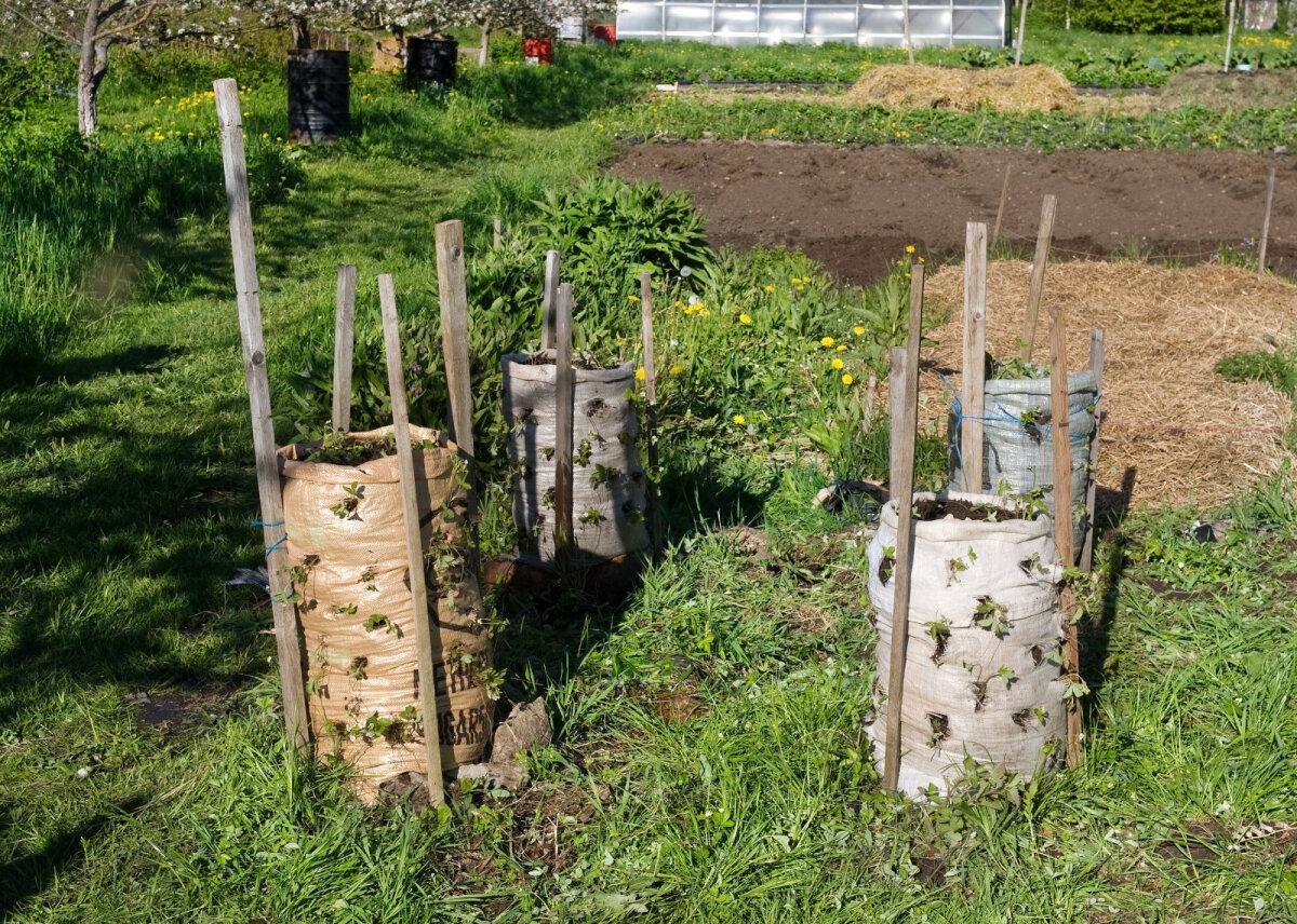 Vanadesse suhkrukottidesse tehtud maasikatornid. Taaskasutus ja ruumi kokkuhoid.