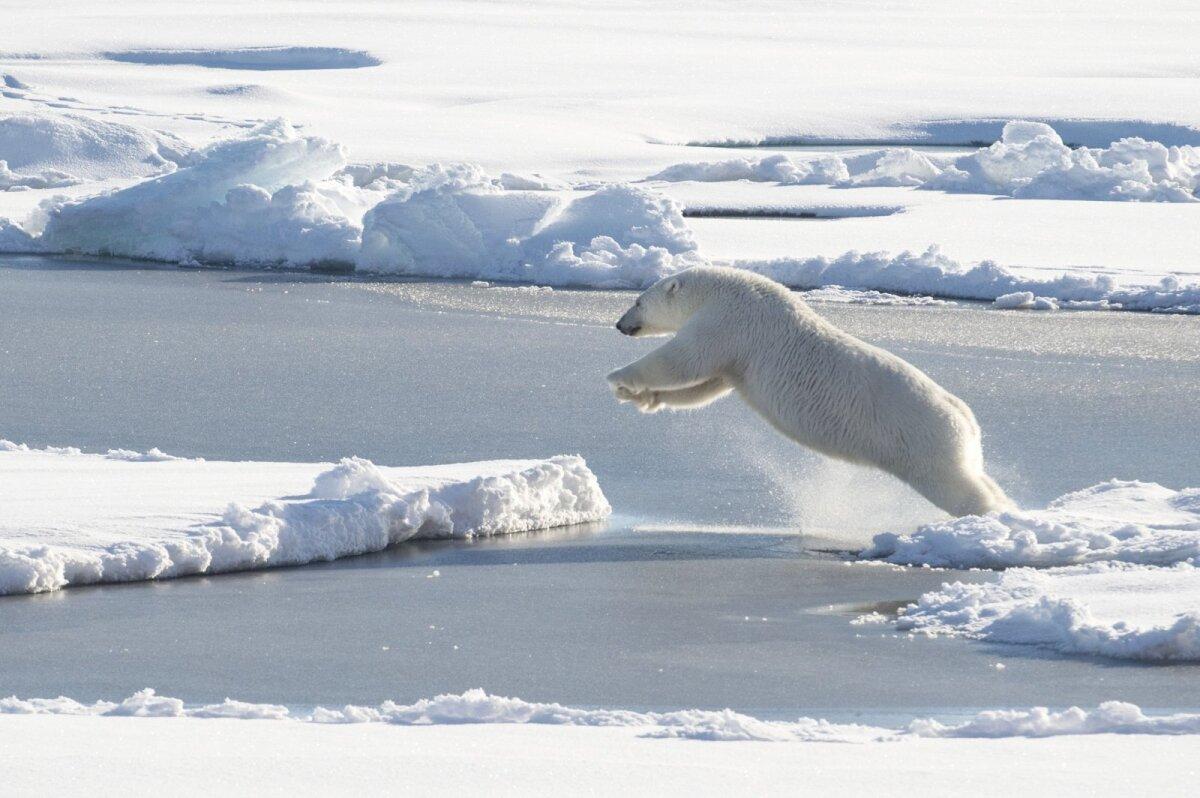 Arktika jää sulamine on kliimasoojenemise mõttes olulisem kui Antakrtika jää.