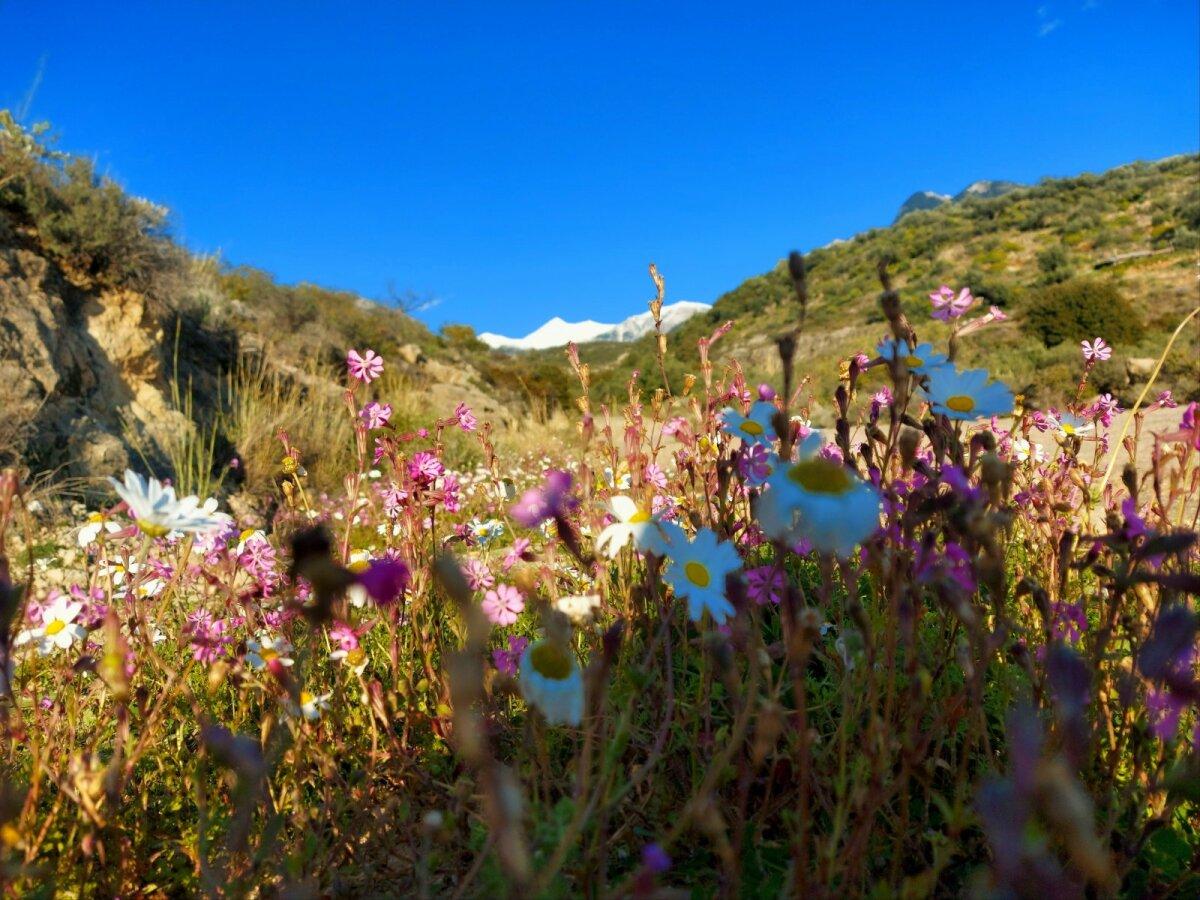 В Греции уже вовсю цветут цветы, хотя в горах еще лежит снег