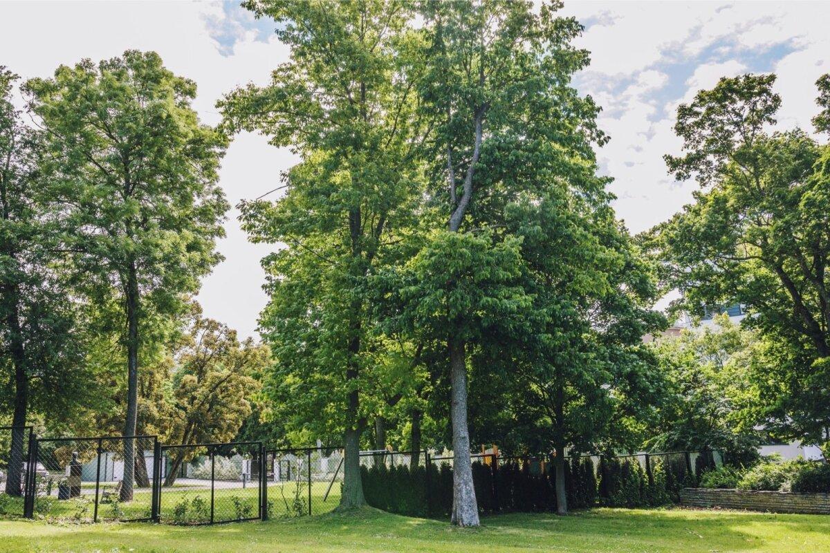 Asukoht: Tuvi park e Rahvusraamatukogu park