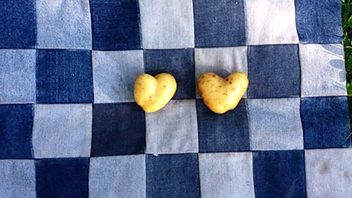 Südamekijulised kartulid.