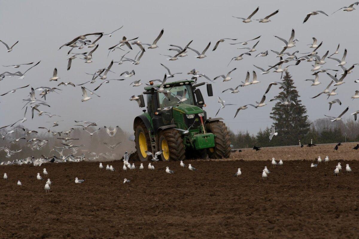 Kevad, põld, kevadtööd, linnud, põllumees, farmer