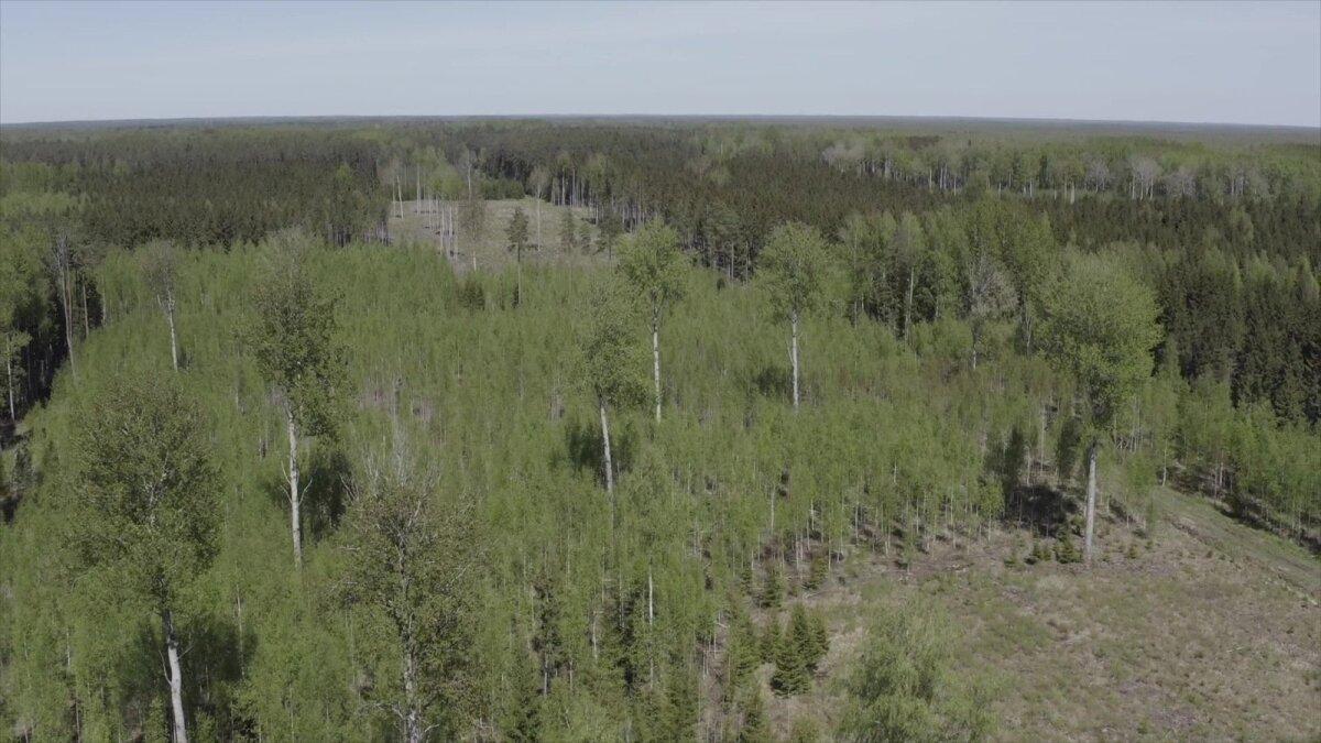 Erinevas vanuses metsad tagavad selle, et mets otsa ei lõpeks.