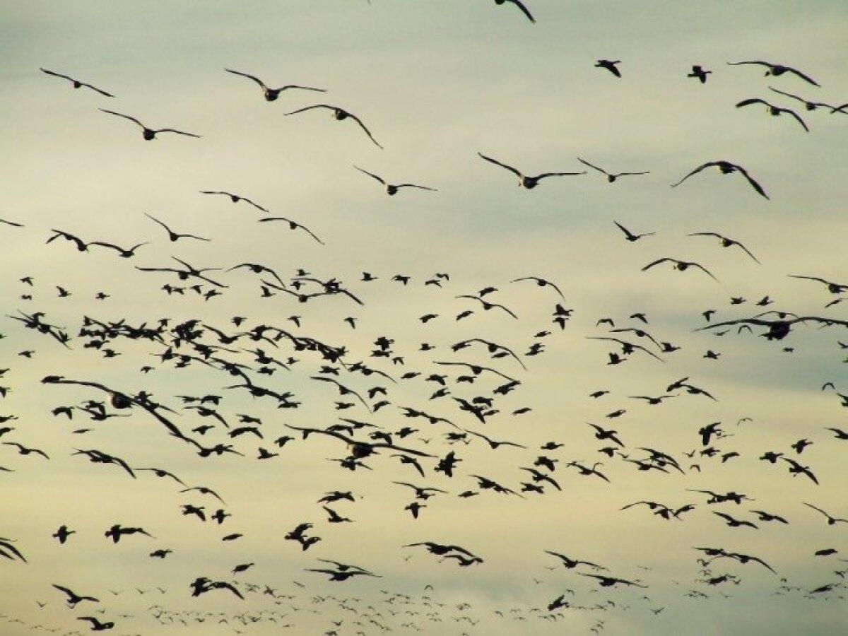 Lindude ränne Haeskas