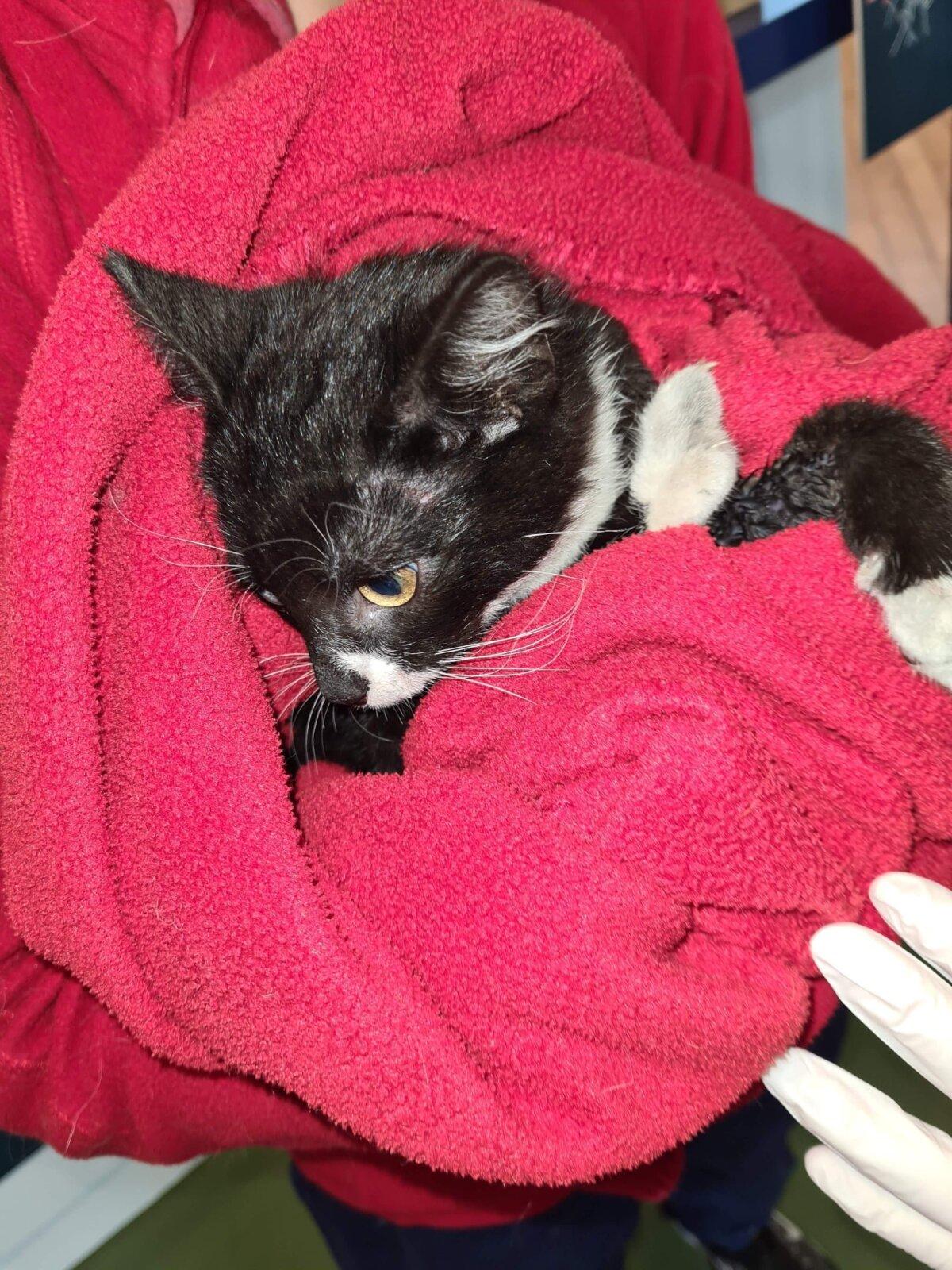 Automootori vahele jäänud kassipoeg Vasja