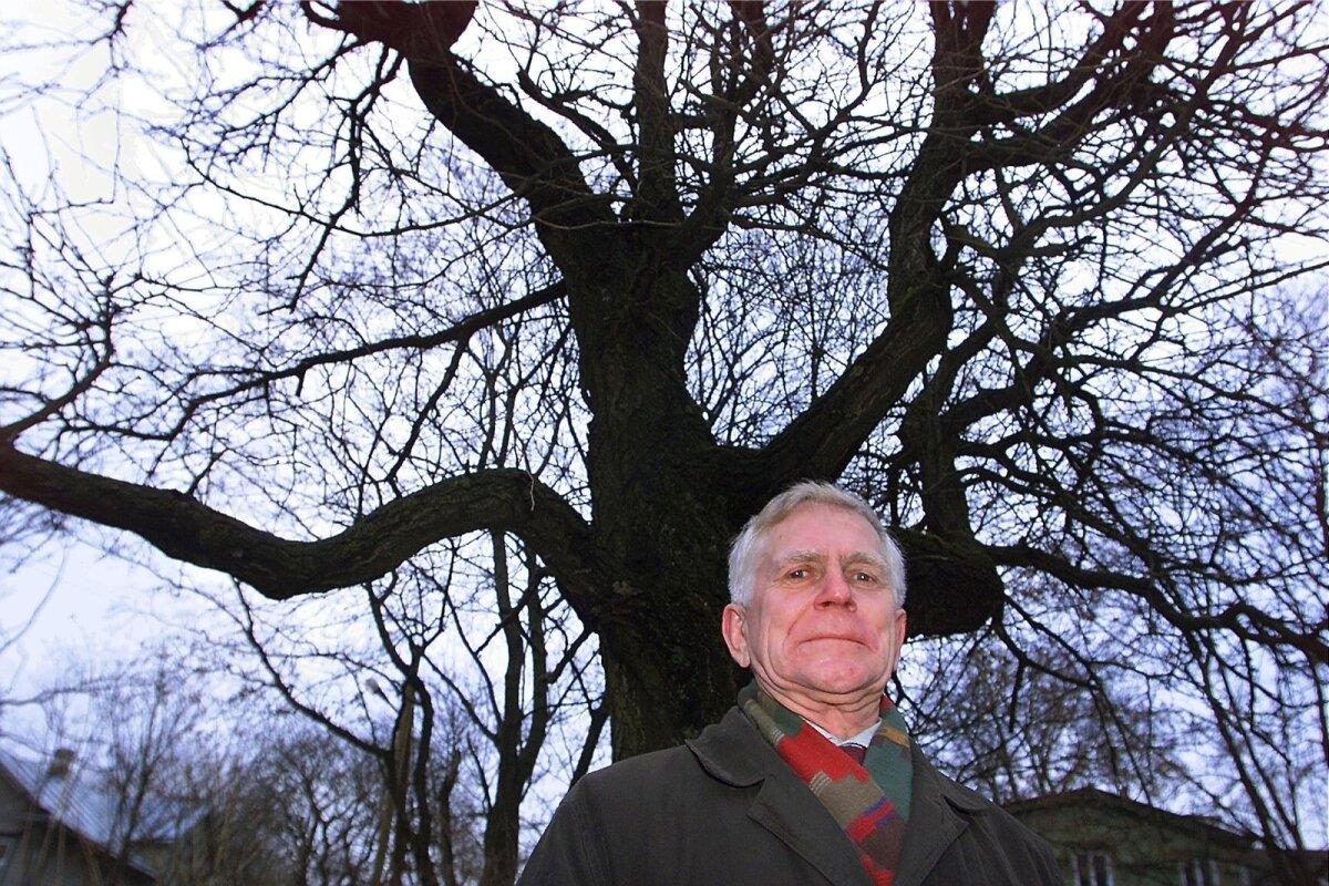 Keskkonnakaitsja Andres Tarand 2009. aastal Süda tänava hõlmikpuu juures.
