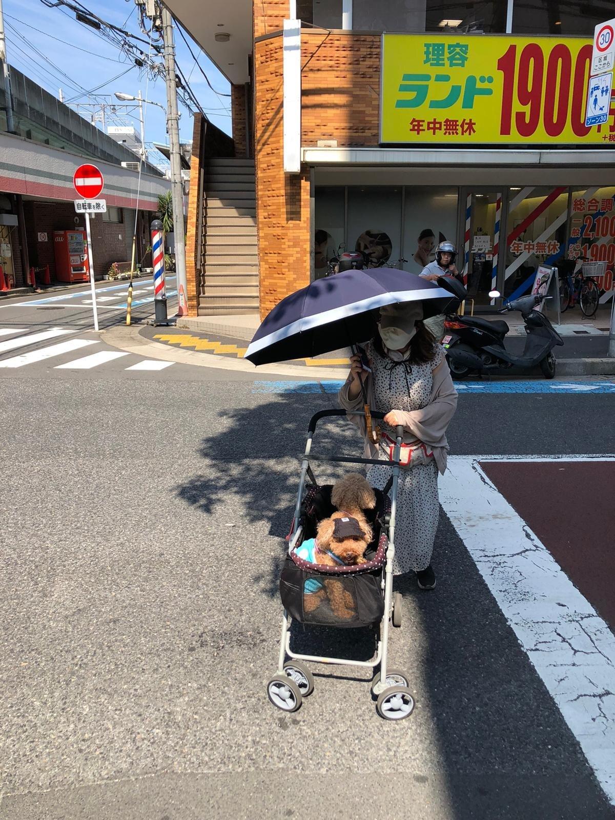 Ka koeral on kuumas Tokyos müts peas.
