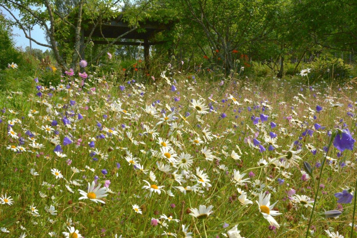 Juulikuisel lilleaasal on näha härjasilma, kurekatelt, äiatari ja ristikut.
