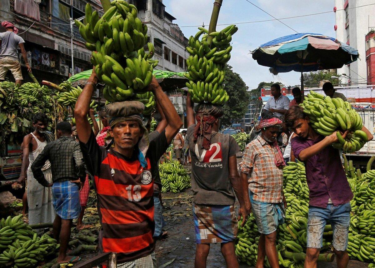 KOLLANE LEIB: Kolkata töölised laadivad turule müügiks minevaid banaane veoautodele.