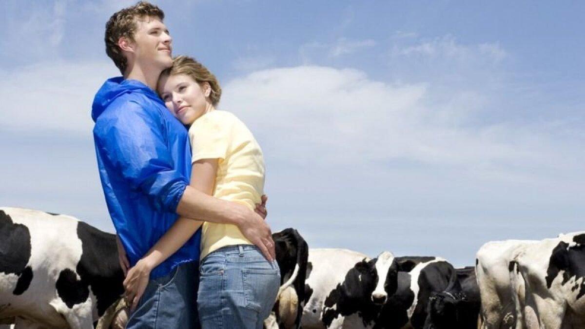 Чувство спокойствия рядом с другом и в окружении дружественных коров