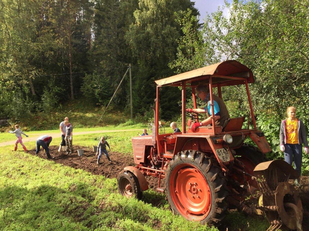 Tänavu saabus Koidu vanemate juurde kartulivõtule nii palju abistajaid, et lapikeste pärast tekkis konkurents.