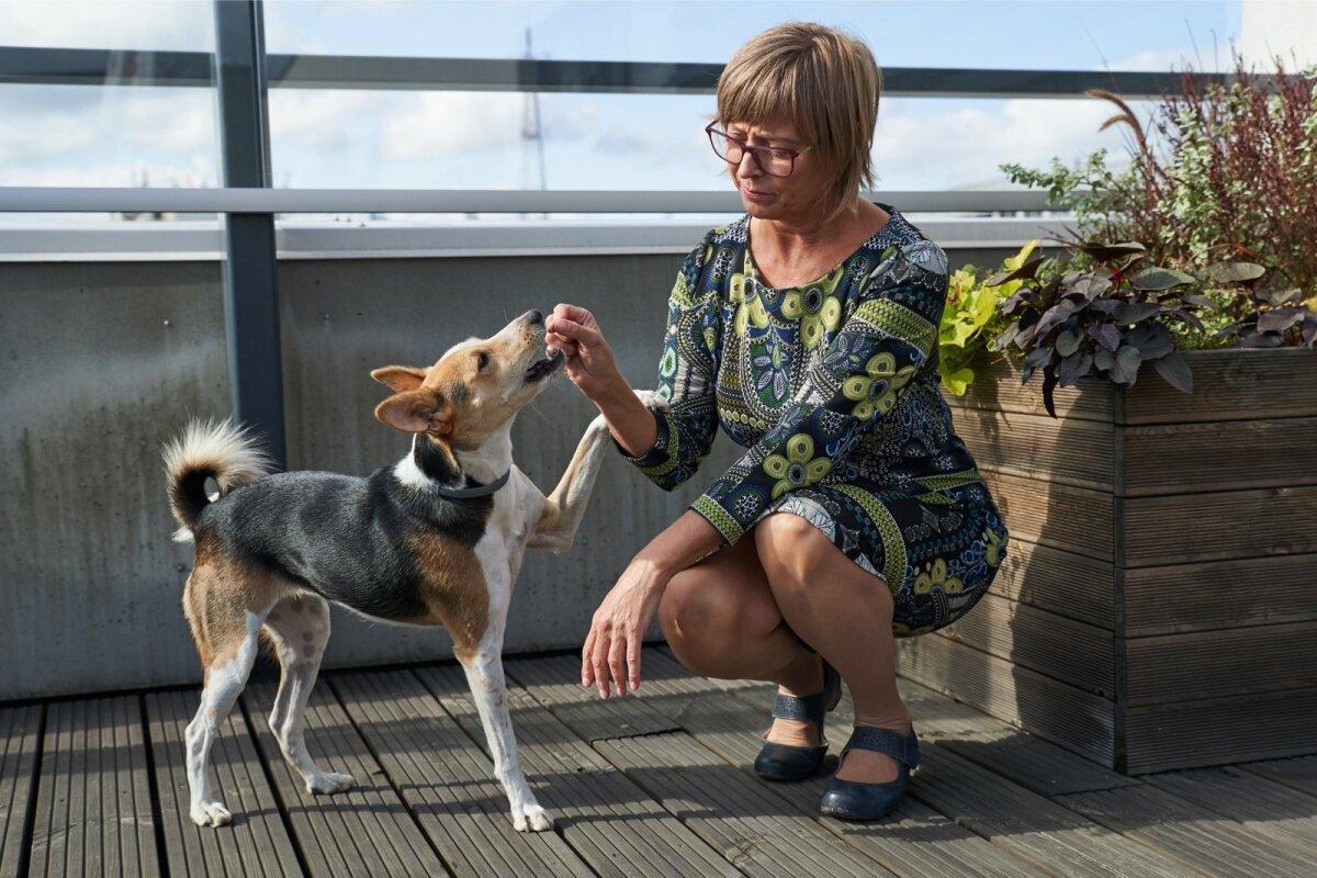 Hoolimata sellest, et Lily on juba 3-aastane, käib omanik temaga regulaarselt koertekoolis.