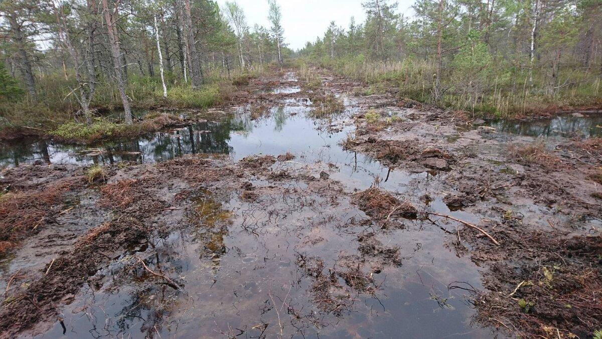 Kümne aasta jooksul on RMK taastanud ligi 12 500 hektarit sooelupaiku. Pildil on taastatav Saesaare soo.