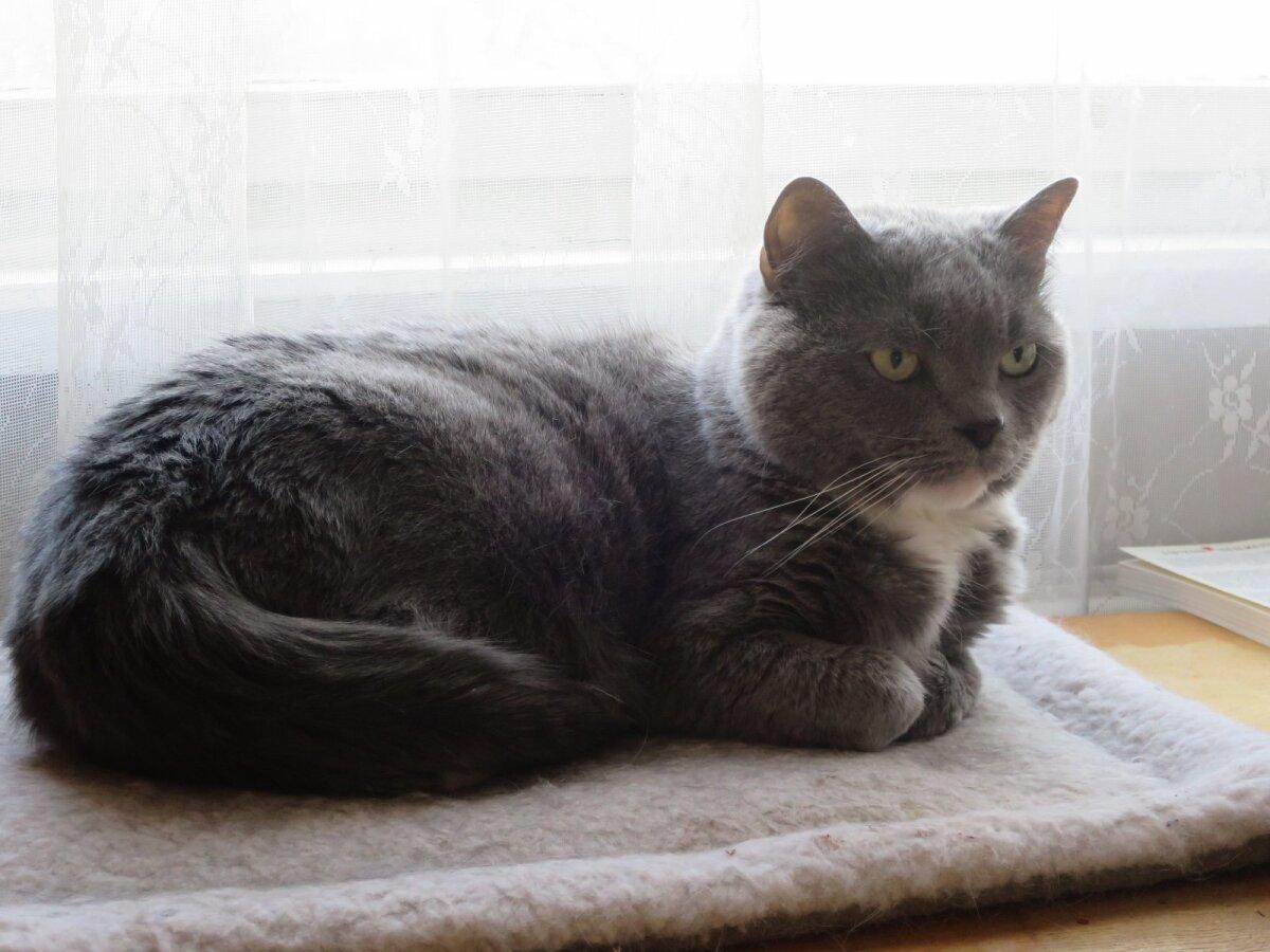 Anu Allikvee kass Kiki