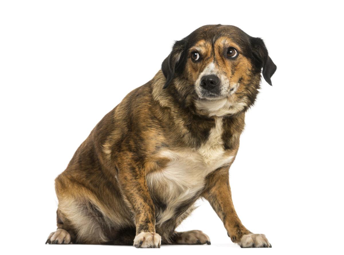 Alandlik ja hirmunud koer.