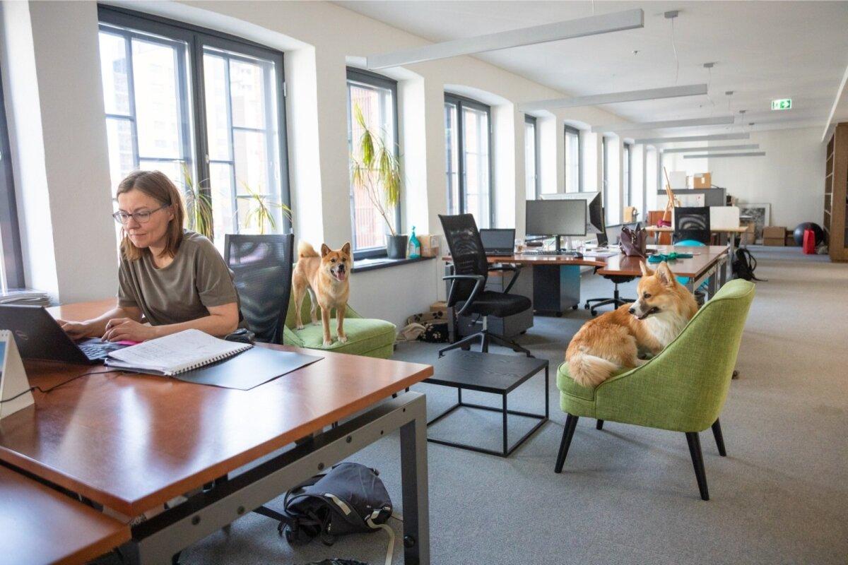 Algselt koosolekuruumi planeeritud toolid on nüüd koerte omad.
