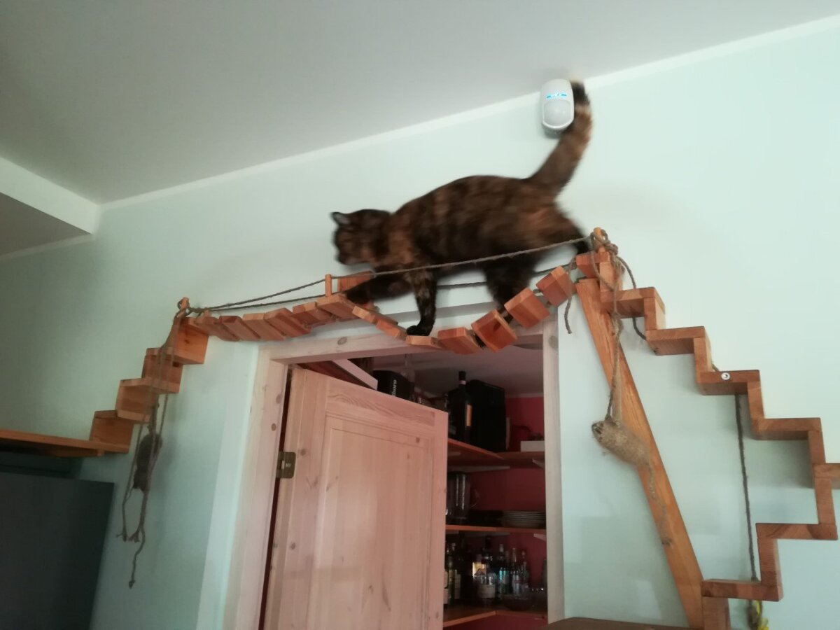Tubane kass