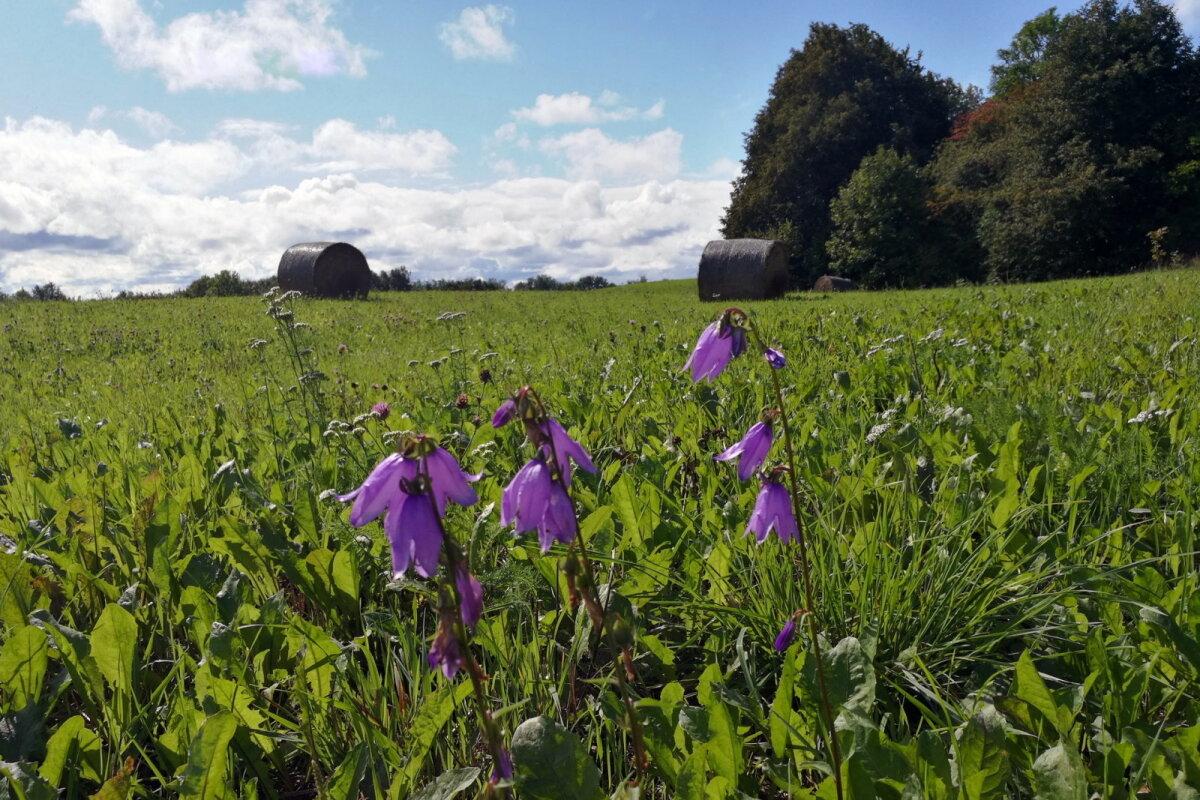 На этом поле видела аистов. Но сфотографировать не успела, да и были они далеко от меня.