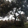 Сломанная пальма