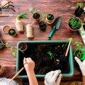 Aprill on külvajate kuldaeg. Ent kuidas valida õige muld ja millised ohud varitsevad taimi aknalaual?