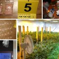 ФОТО   6,7 кг наркотических веществ, 119 таблеток ЛСД и 9000 евро. Наркополиция Идаской префектуры установила личный рекорд