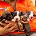 Need kutsikad konfiskeeris veterinaaramet Saku vallast, nüüd ootavad nad hoiupaigas uut kodu.