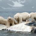 ÜRO kliimajuht: oht on tõsisem kui eales varem, juba varsti ei suudeta halvimat vältida
