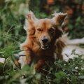 Что делать, если навстречу бежит собака? Можно ли гладить ее по голове? Кинолог объясняет важные правила для детей и взрослых
