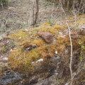 Torma vallas Tuimõisa külas leidsid matkajad käsigranaadi RGD-33