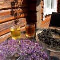 Кипрейное раздолье: чем полезен иван-чай и где его искать?