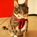 Kui teistel kassidel on jalutamistraksid, siis miks ei võiks neid ka Leol olla?