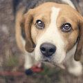 Hämmastavad olendid | KAHEKSA asja, mida koer inimese kohta tajuda suudab
