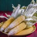 RETSEPTID | Küpsetame maisi! Vaata, kuidas maisi õigesti keeta ja grillida, lisatud ka jumaliku maisikoogi ja väga põneva maisisupi retseptid