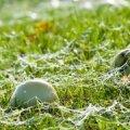 INTERVJUU: Rimi: kauplustesse tulevad Eesti õunad müügile nädala jooksul