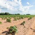 В Эстонии появится Департамент сельского хозяйства и продовольствия