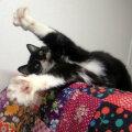 Päriskodu ootaval Kelmiküla kassijaama kassil Ruubenil on üks eriline oskus