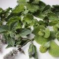 Mündisordid varieeruvad lehtede kuju, aga ka maitseomaduste poolest.
