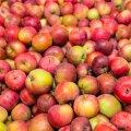 Почему эстонские яблоки не пользуются спросом и что можно купить на рынке и в магазинах