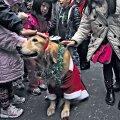 Pühadeaeg rõõmustab inimesi, kuid ajab nende lemmikloomade elu sassi ja tekitab pingeid. Fotod: AFP/Scanpix
