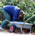 Kel krooniline seljahäda juba käes, see olgu ettevaatlik aiakäruga.