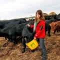 Jane Mättiku sõnul on lihaveiste eest saadav hind nii madal, et ei kata kulusid.