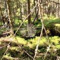Millist metsa praegu ostetakse?