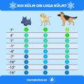 TABEL | Külm tuleb - millal koer tuppa lasta?