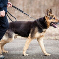 Soome loomaõiguslased avaldasid kaadrid koerte vägivaldsest kohtlemisest treeningutel