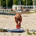 Rannavalve toob pidevalt kaldale vees õhkmadratsil triivima läinud lapsi