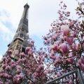 Франция объявила дату открытия страны для туристов