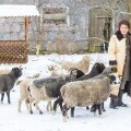 Made Uus lambanahkses kasukas lammaste keskel.