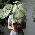 Armastad taimi, aga nemad sind mitte? Need KAKS tähemärki saavad taimede eest hoolitsemisega hakkama
